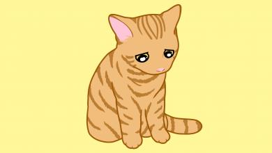 고양이 반성
