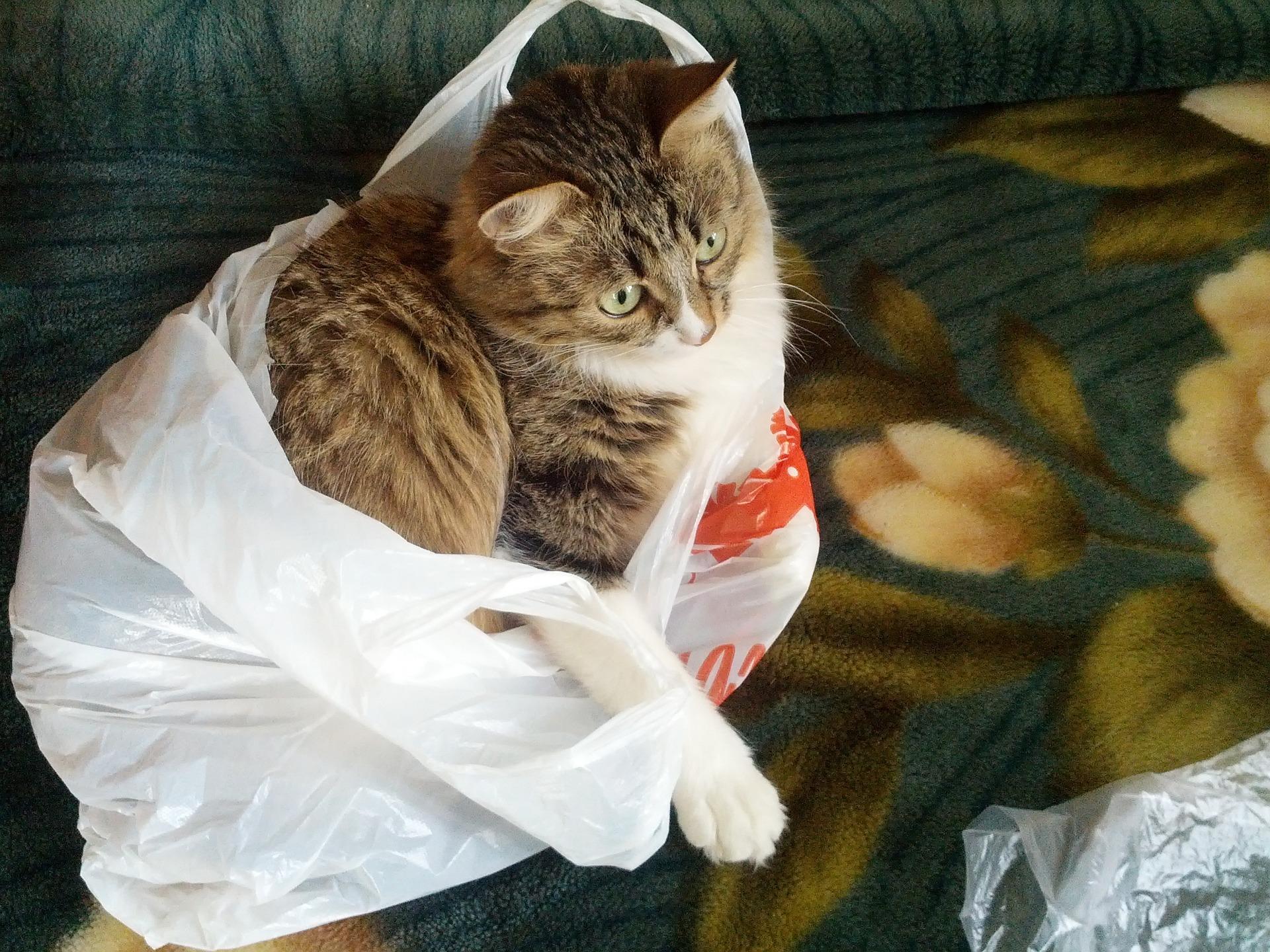 고양이 몰래