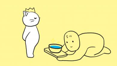 고양이 키울 때