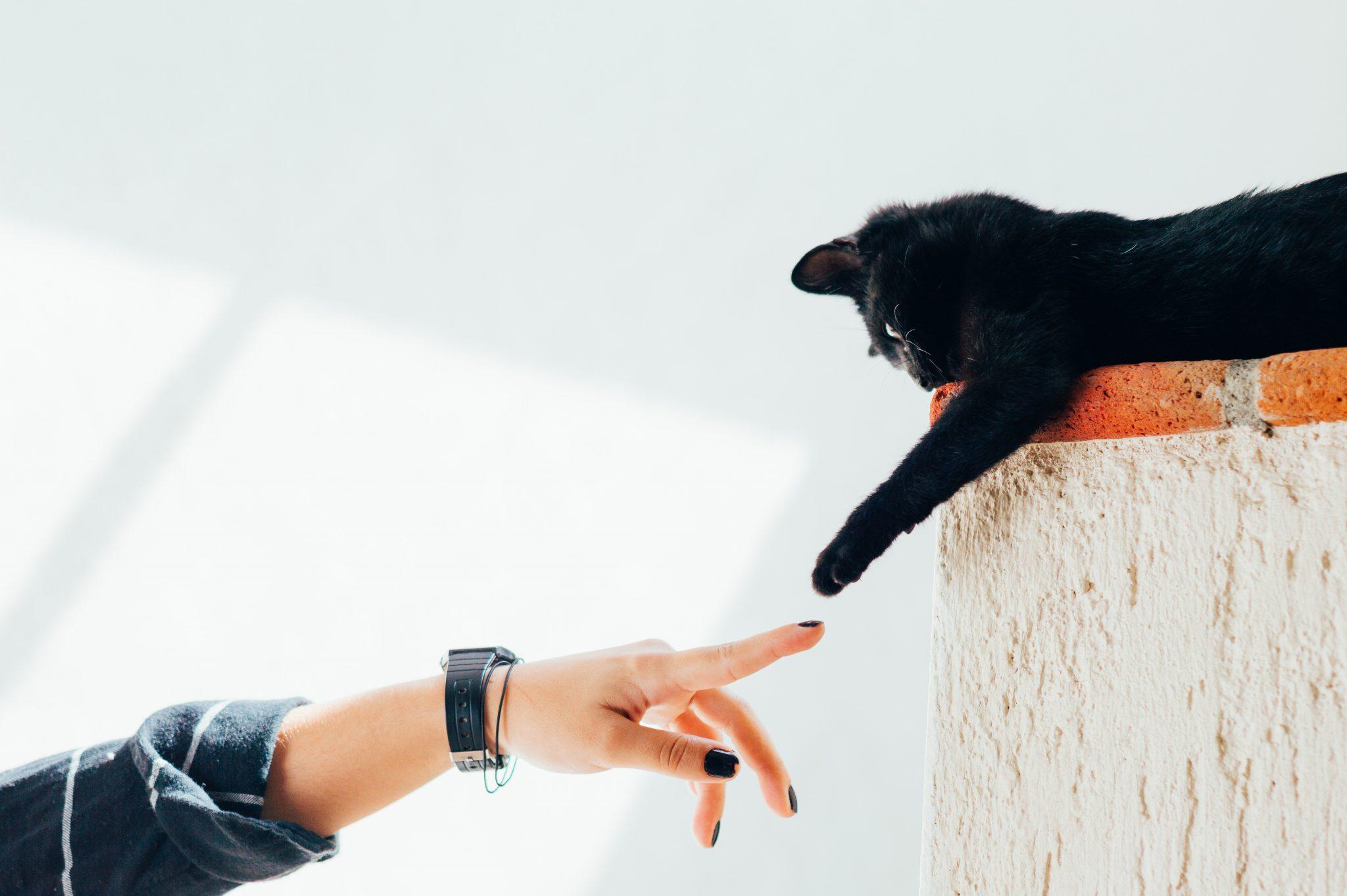 경계심 많은 고양이