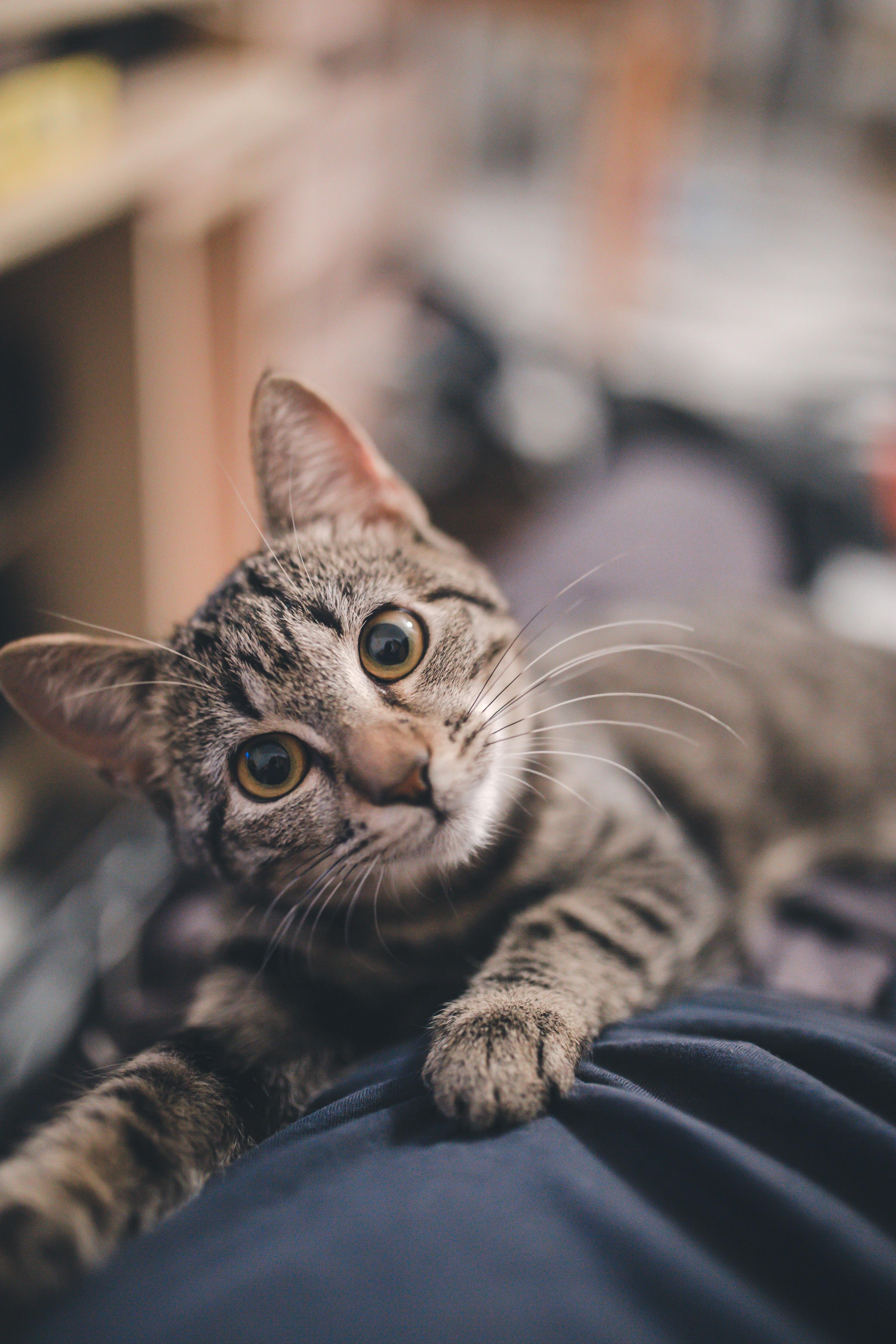 고양이 빤히