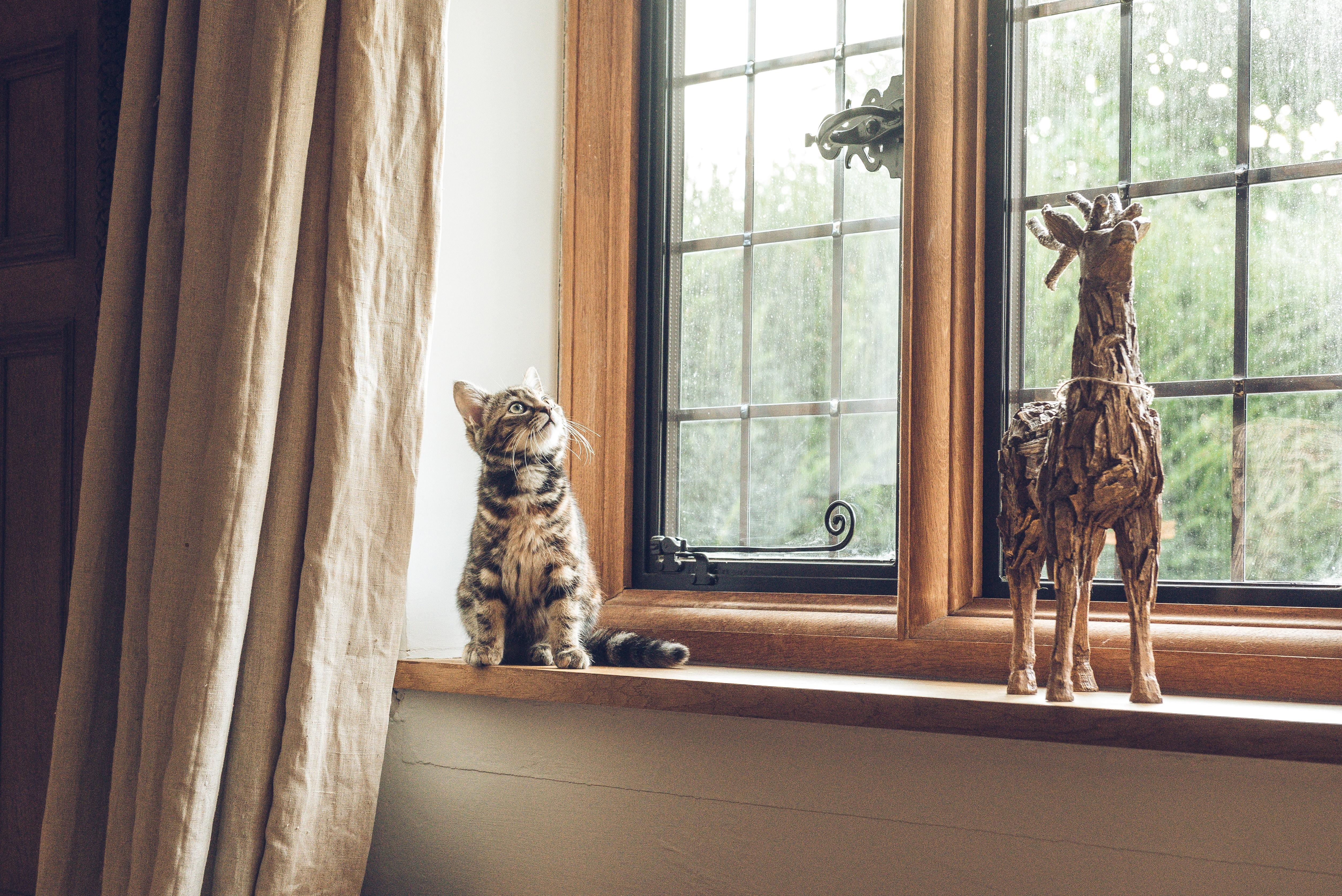 고양이 집사 찾아