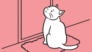 외로움 잘 타는 고양이