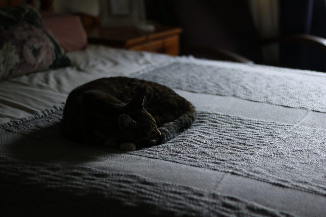 고양이 노화