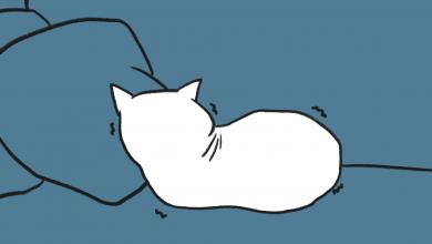 고양이 경련