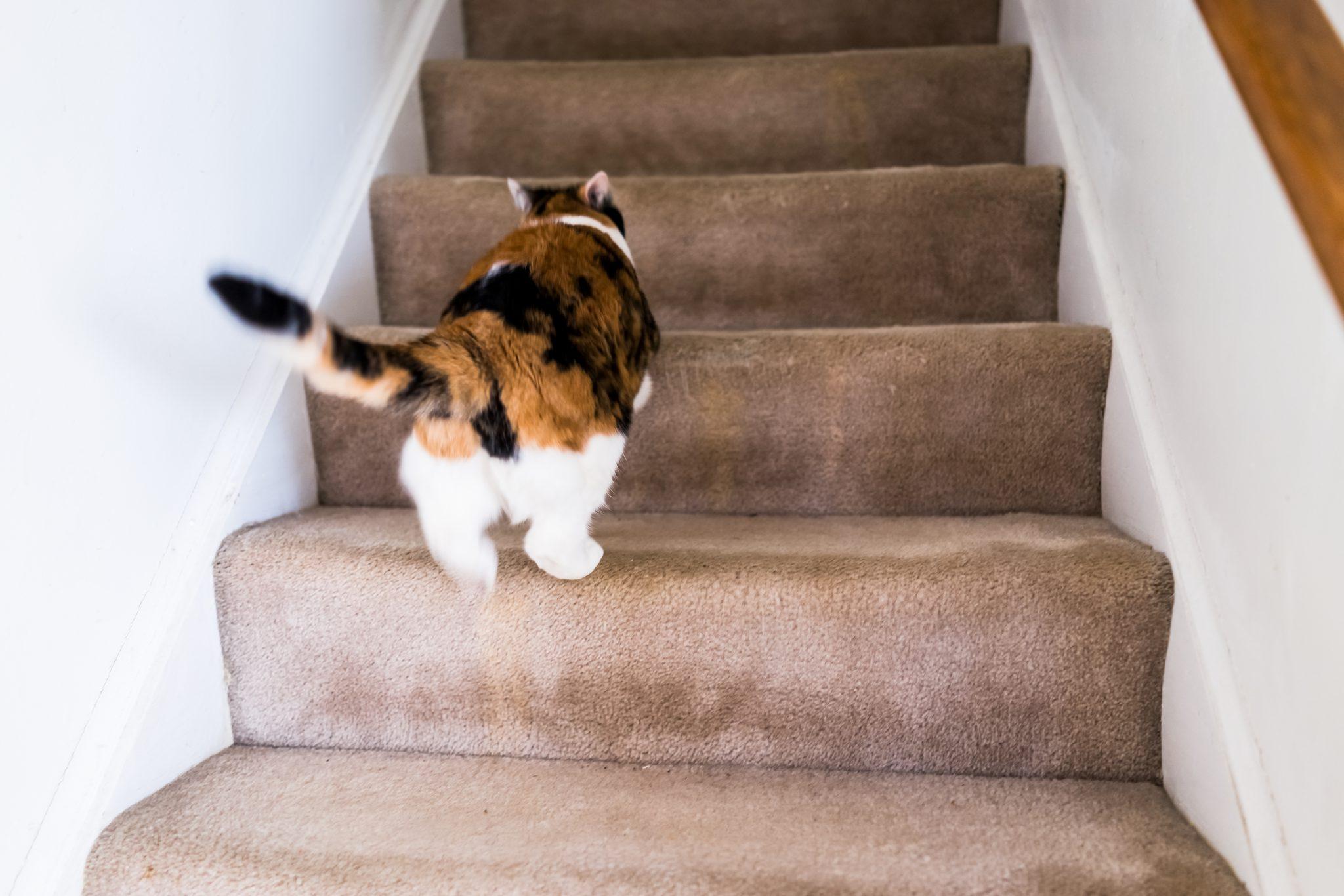 고양이가 싫어하는 소리