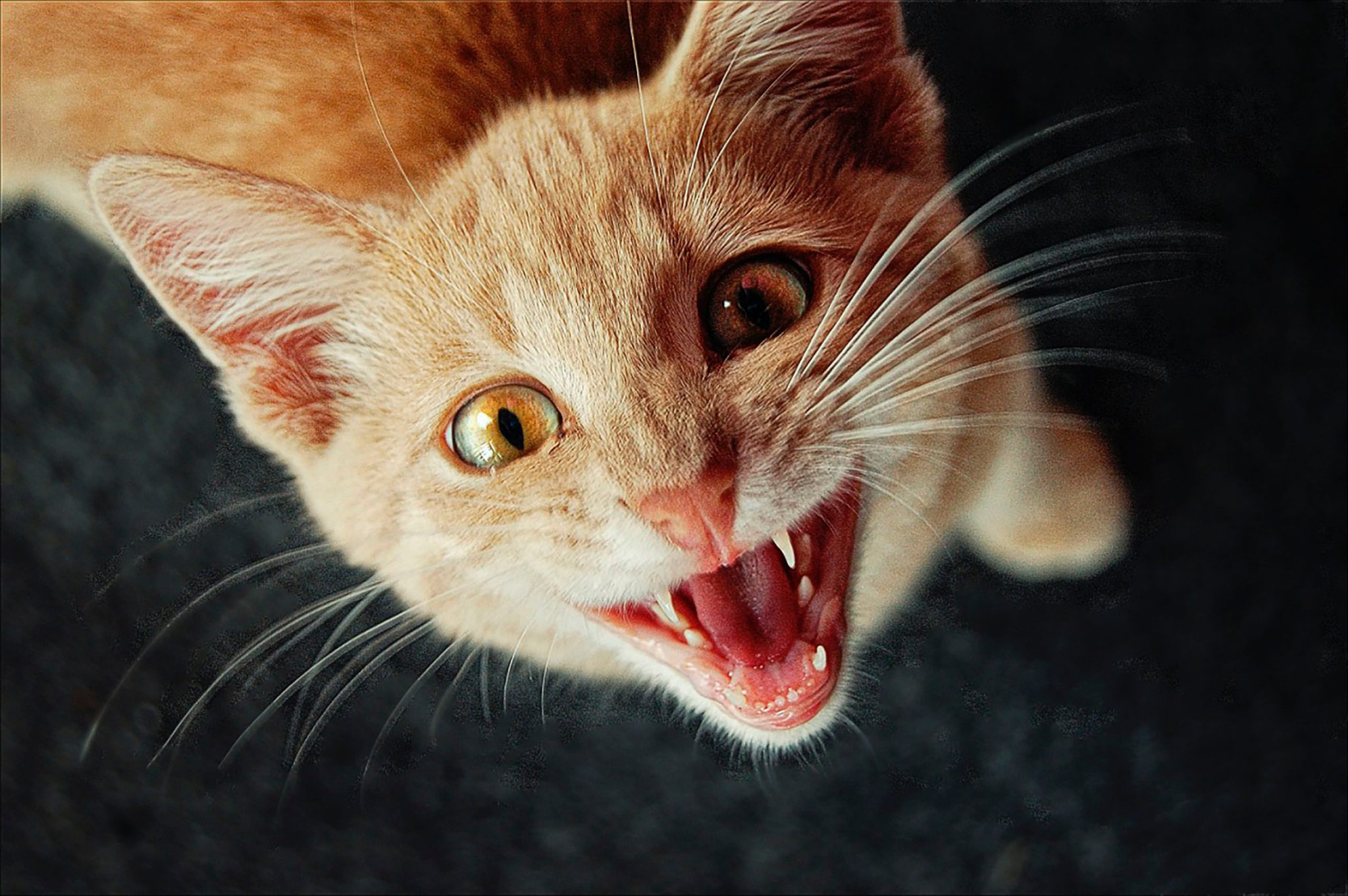 고양이 집사 째려볼