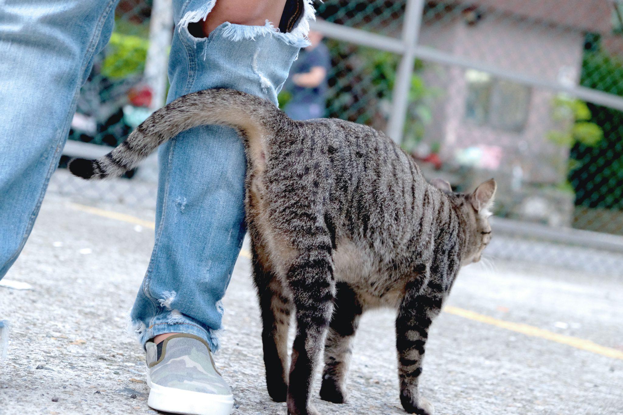 고양이 부비부비