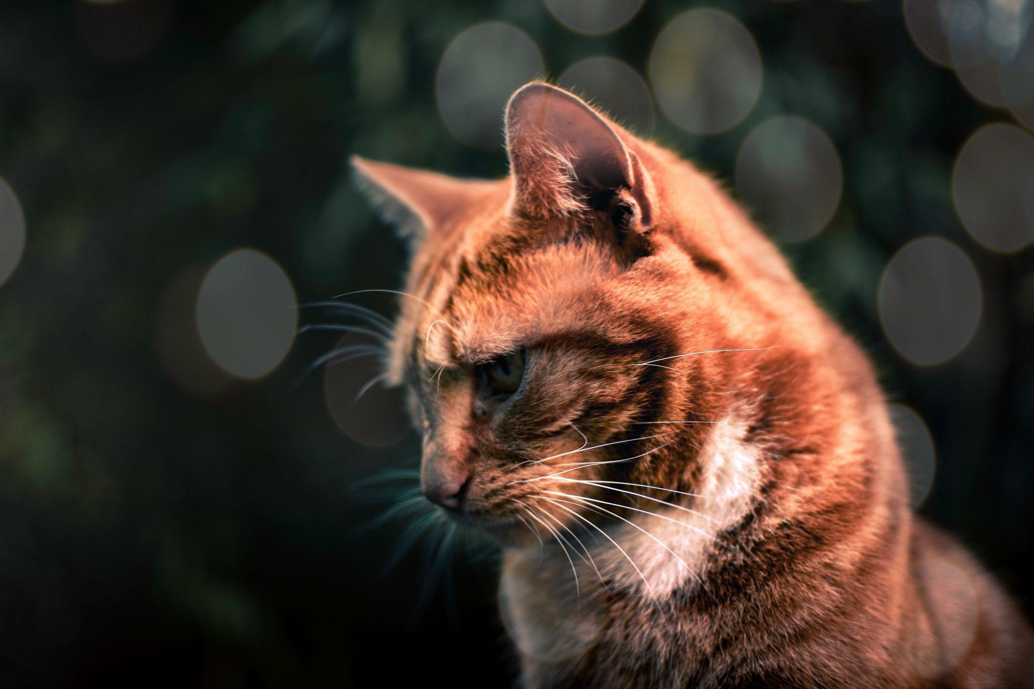 고양이 상처