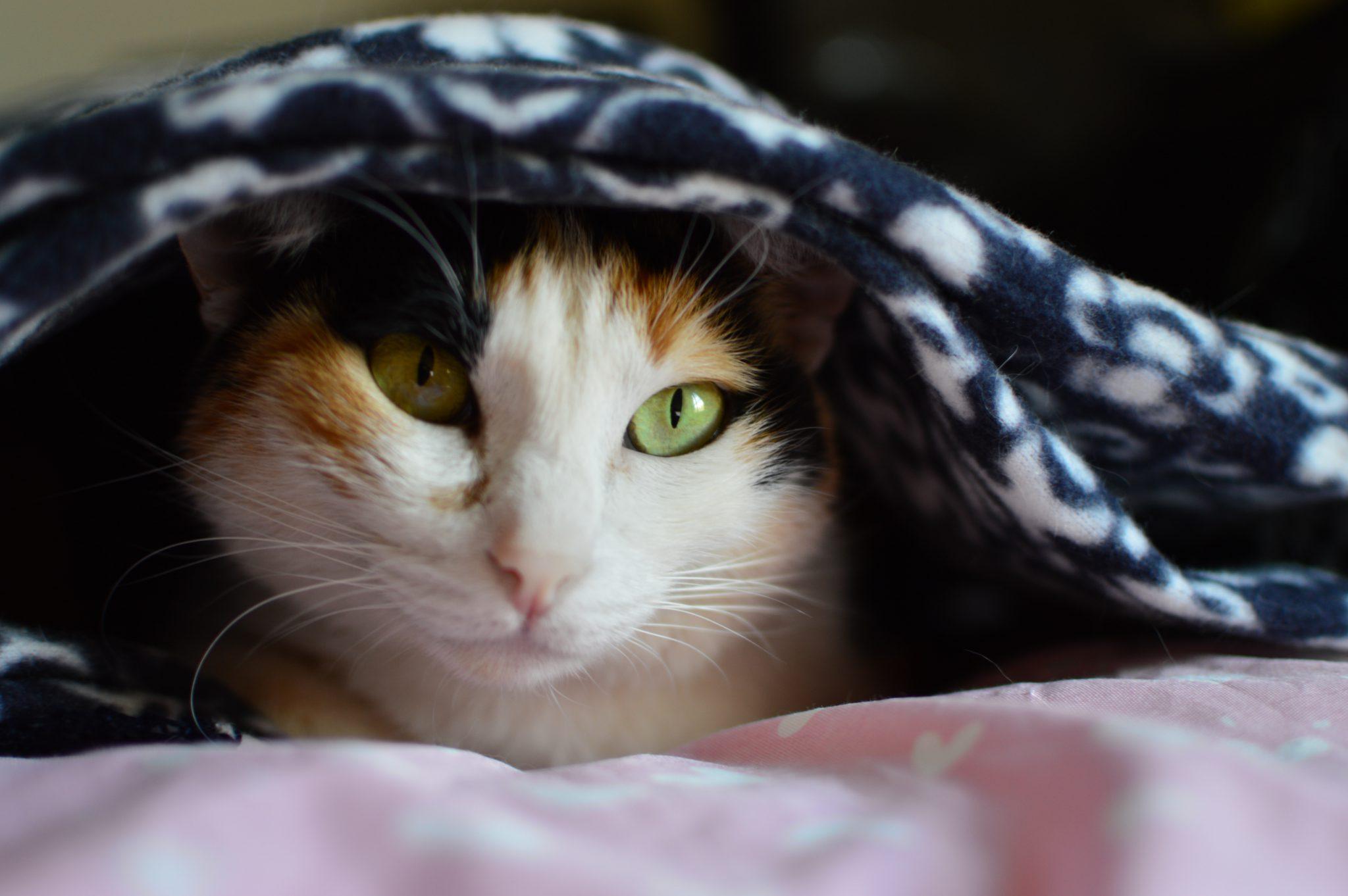 고양이 겁먹었을