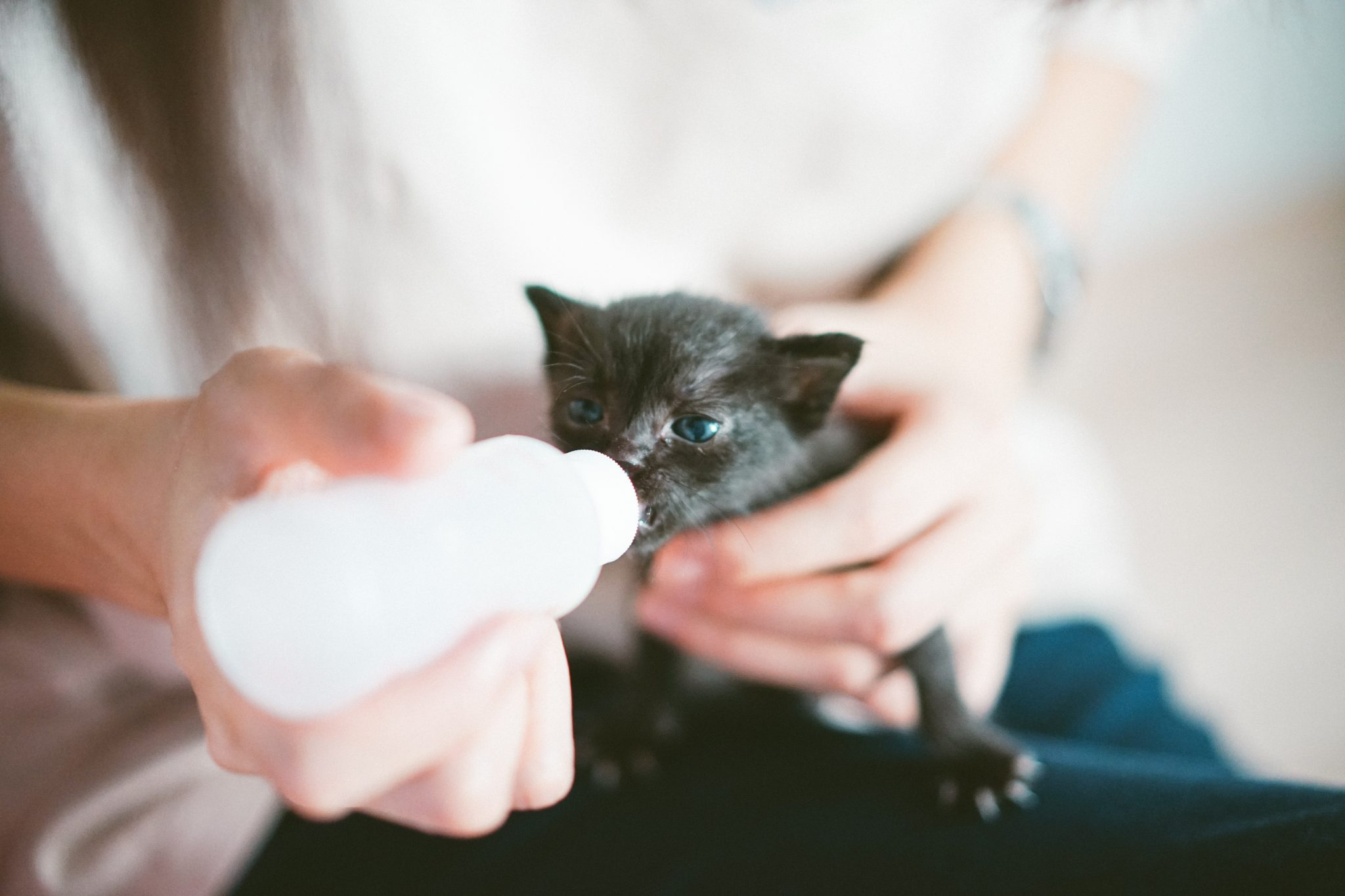 새끼 고양이 분유