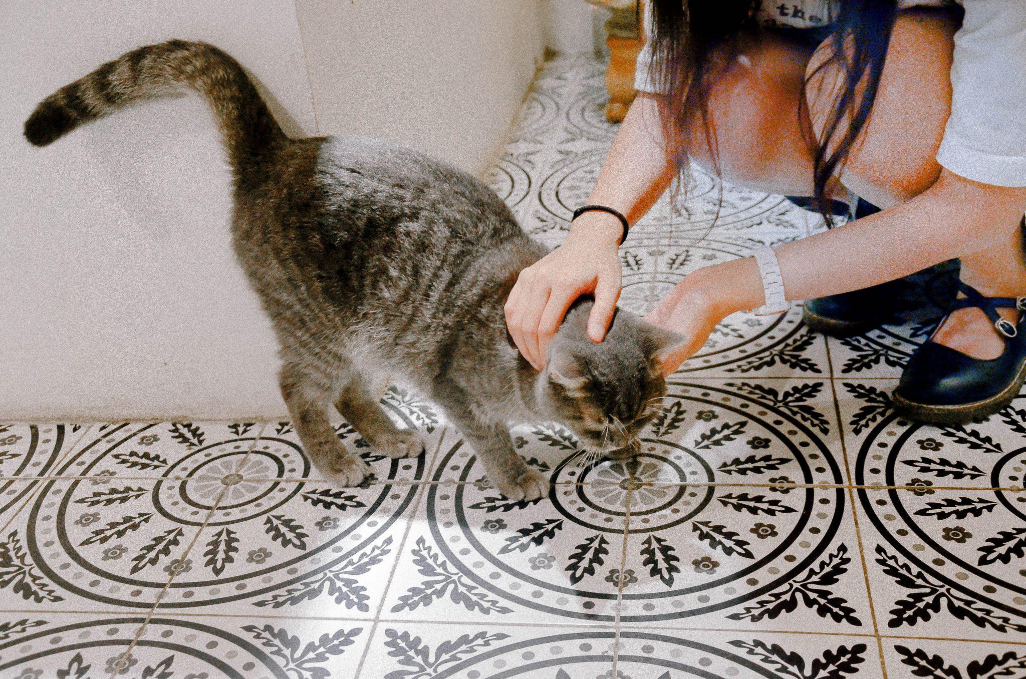 마중 나오는 고양이