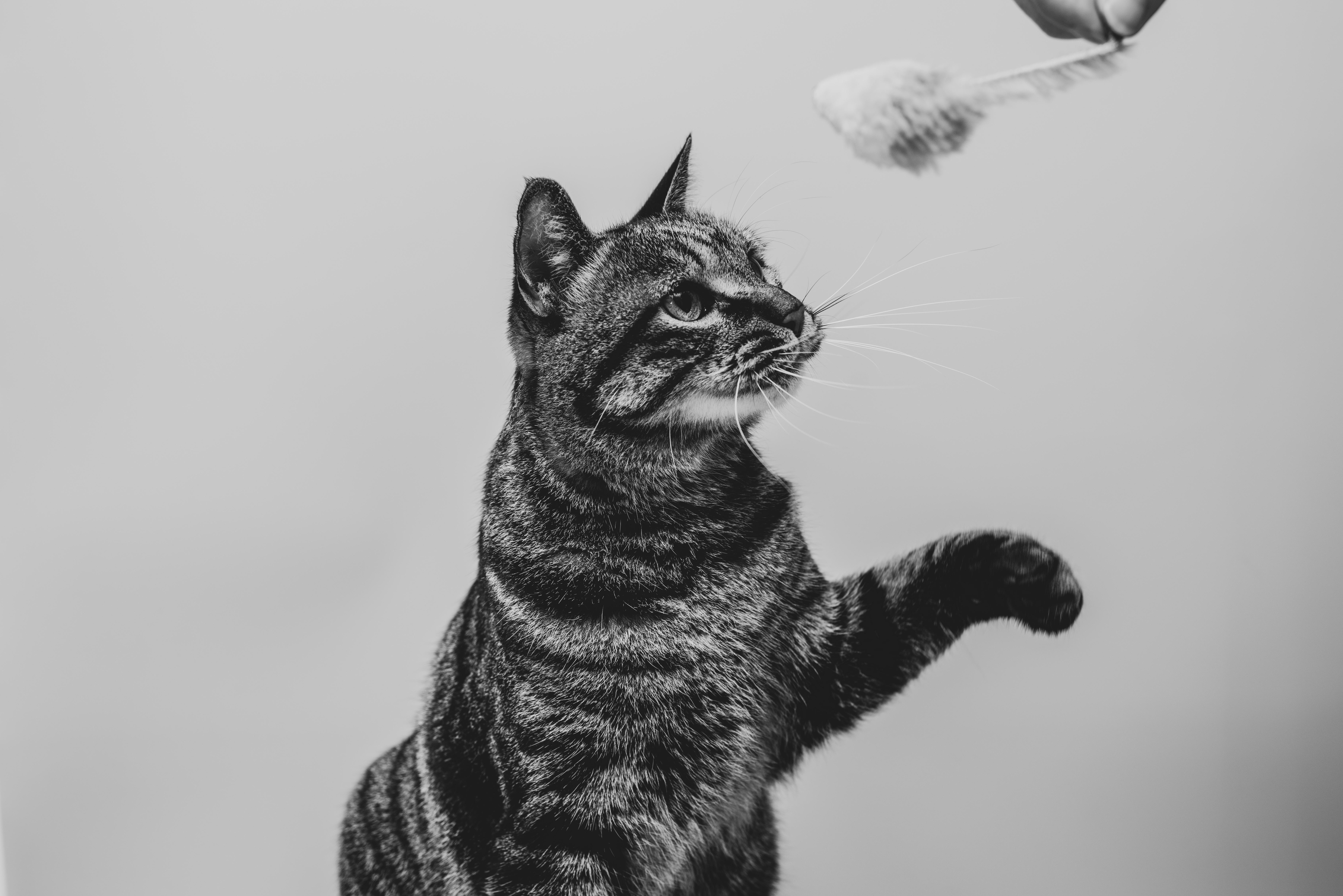 고양이가 부탁할 때