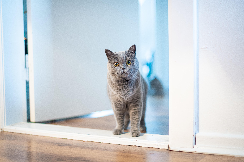 고양이 방
