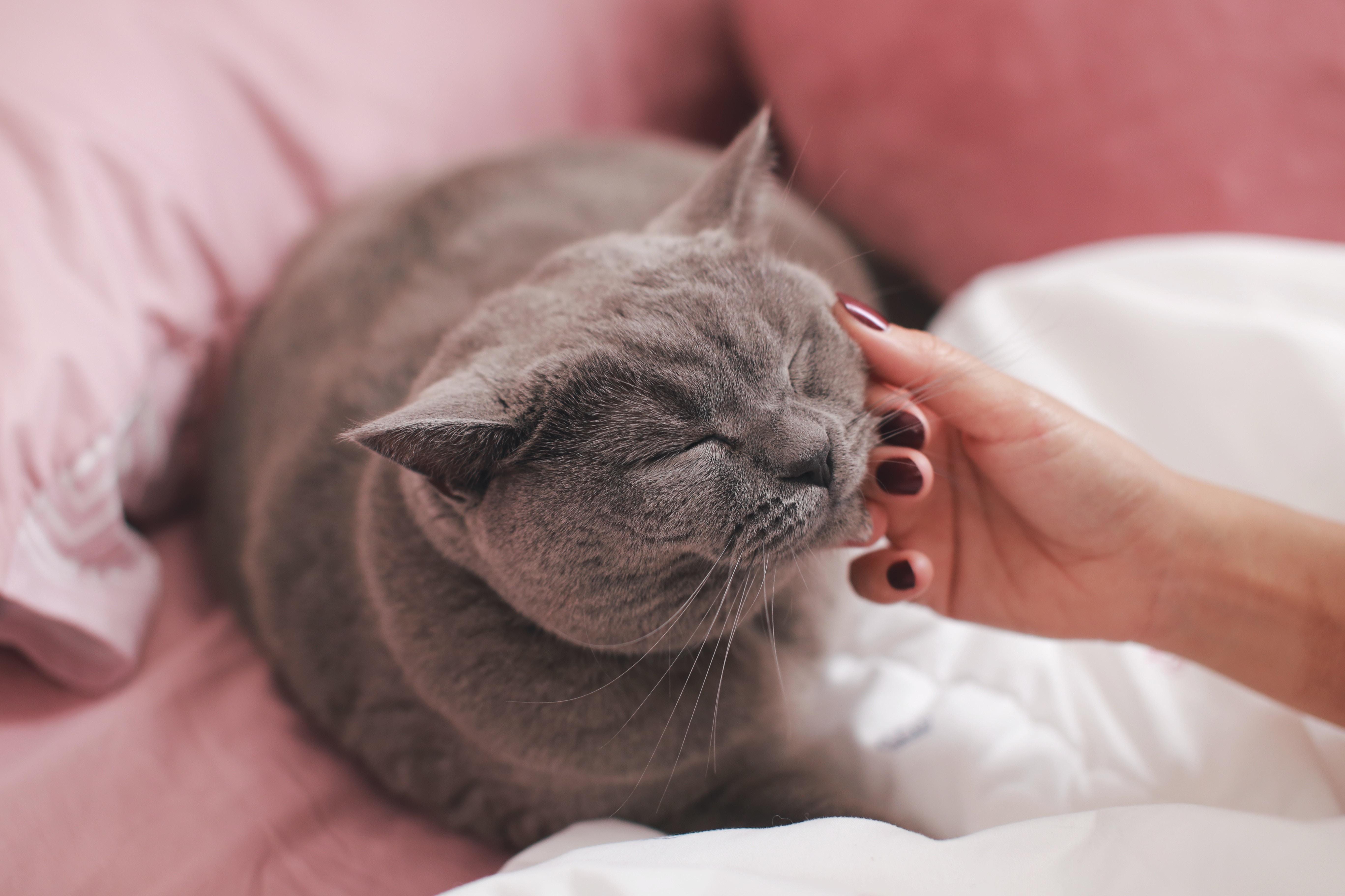 고양이 쓰다듬기