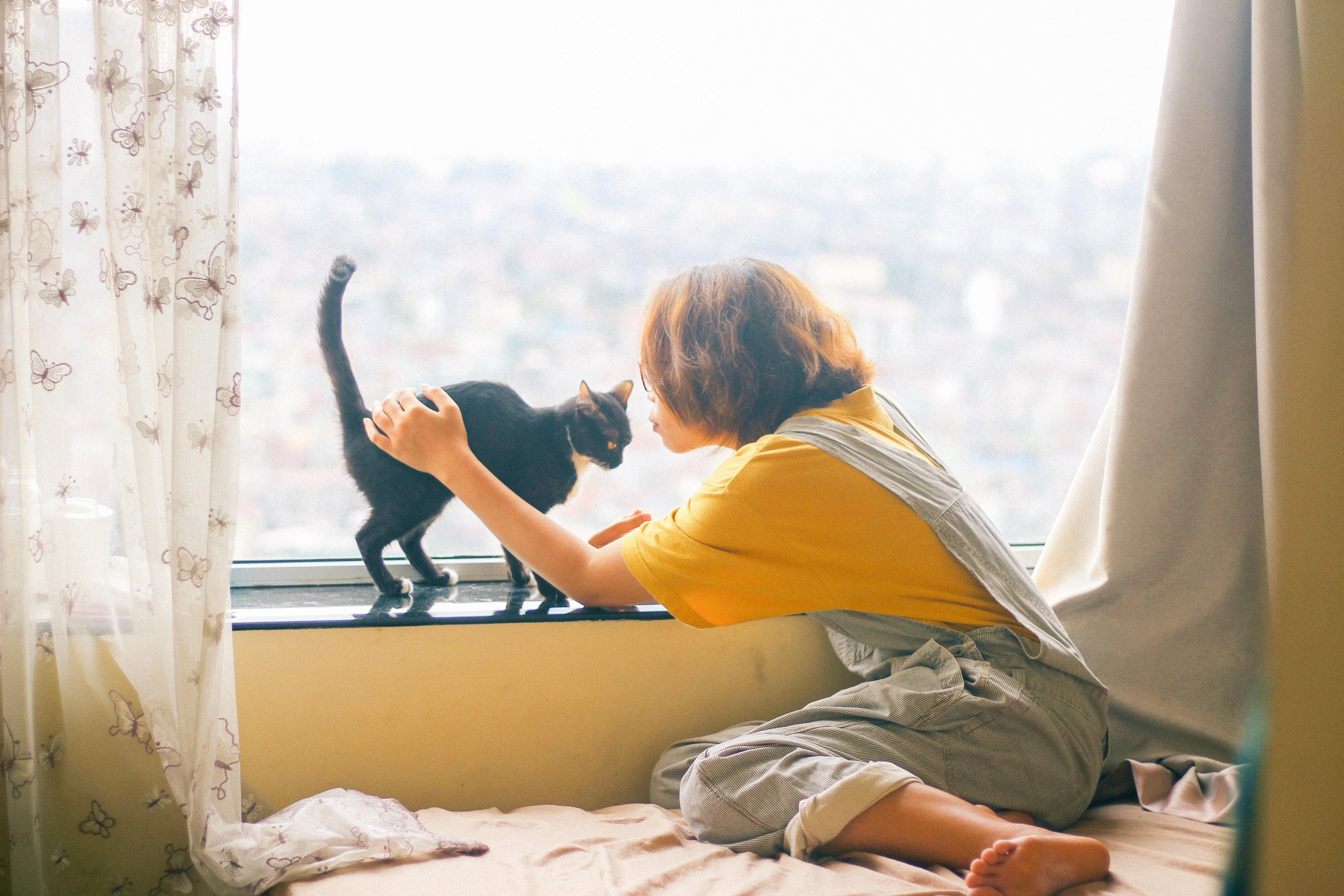 집사를 좋아하는 고양이