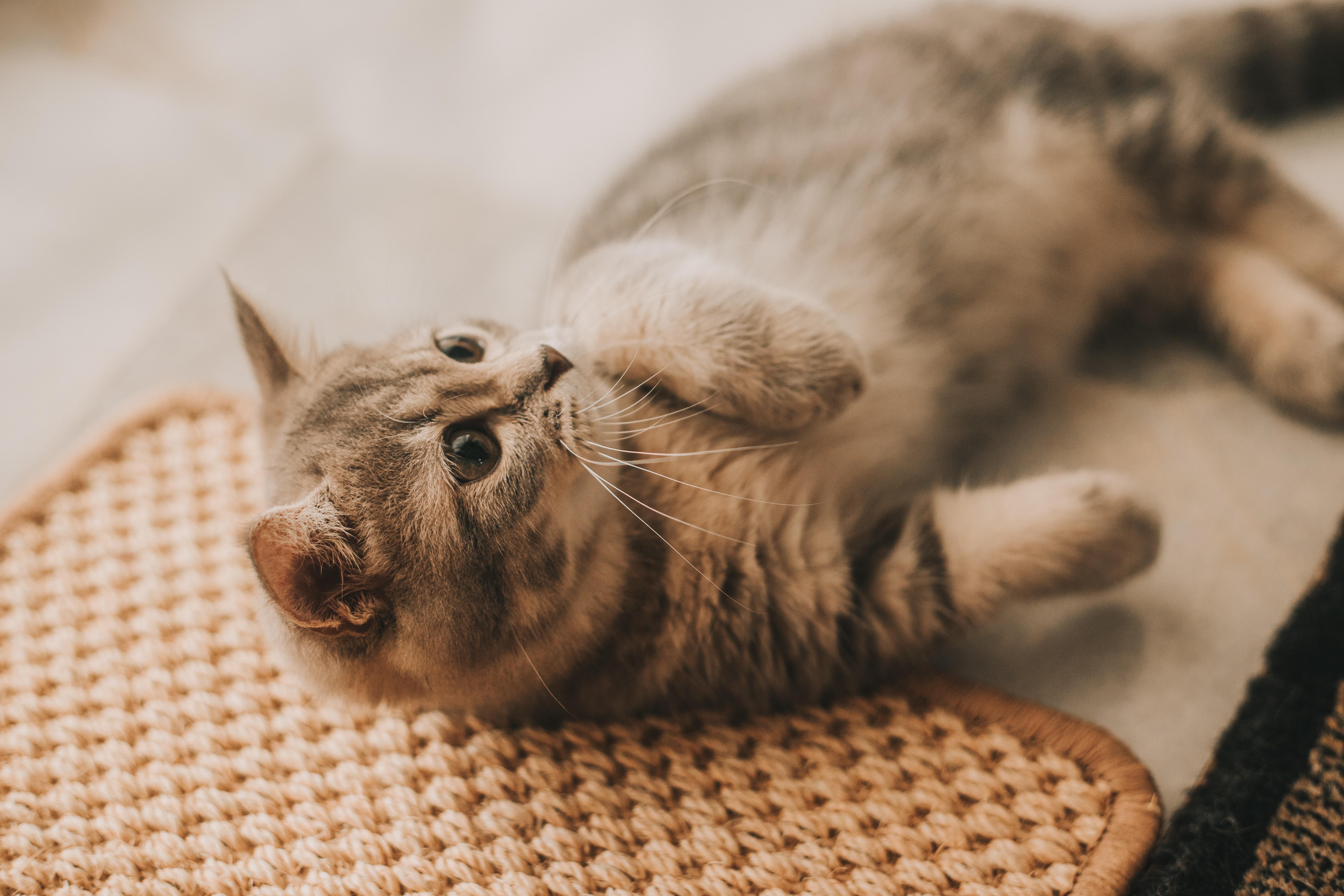 고양이 불평