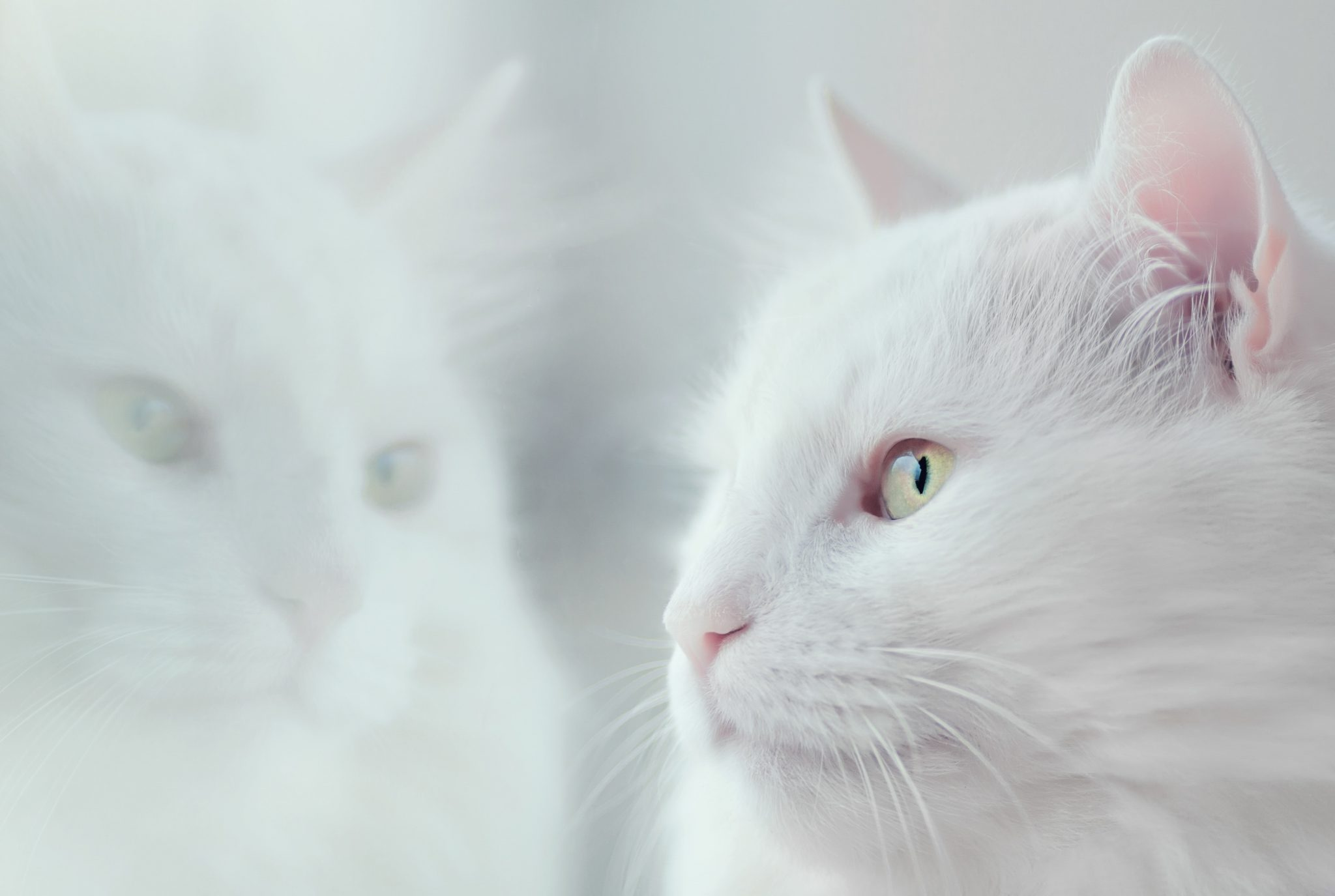 고양이가 현관에서