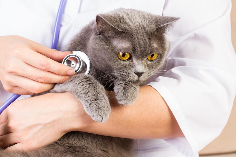 고양이 병원 데려가기