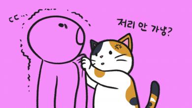 고양이와 궁합