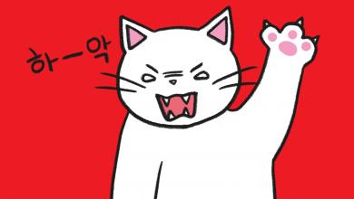 화난 고양이