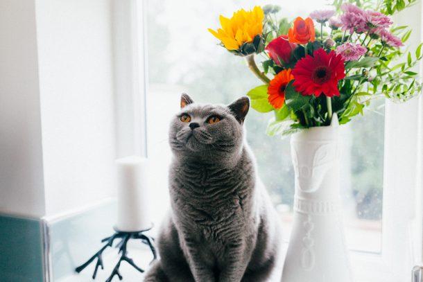 고양이 봄
