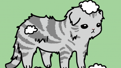 고양이 털갈이