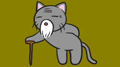고양이 나이