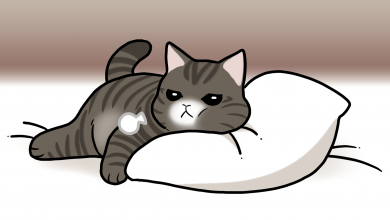 고양이 호흡
