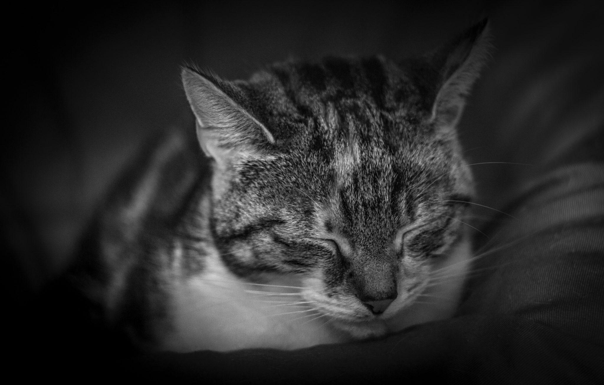 고양이 뇌진탕