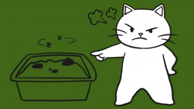 고양이 똥