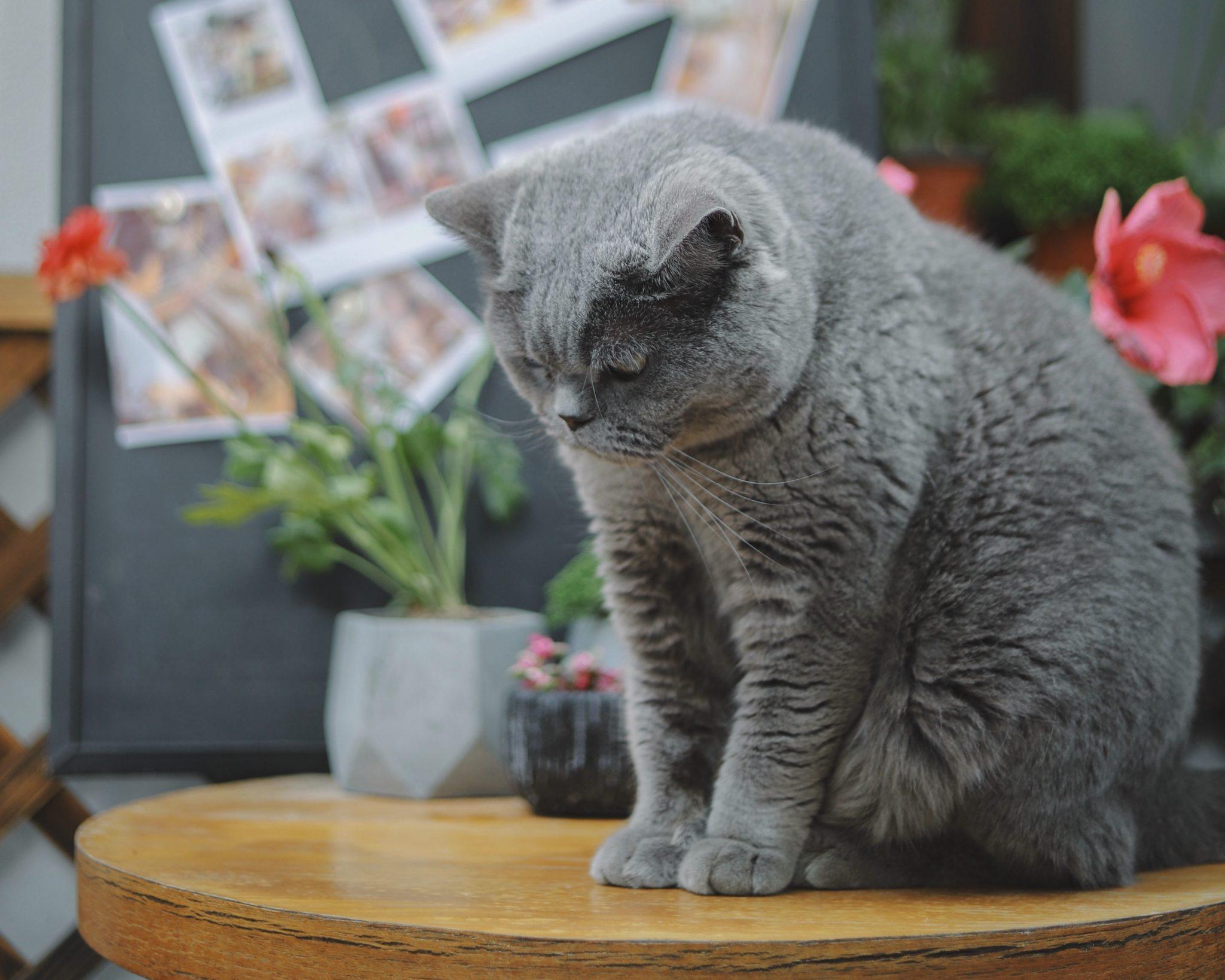 고양이가 미안함