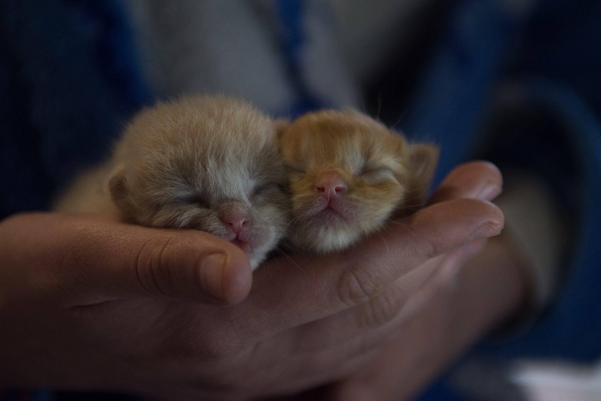 아기 고양이