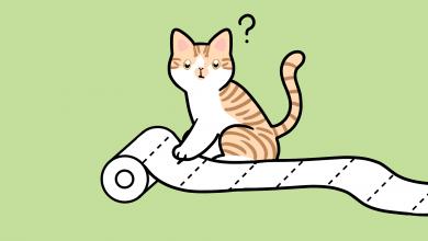 고양이 심리