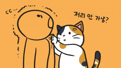 고양이에게 미움
