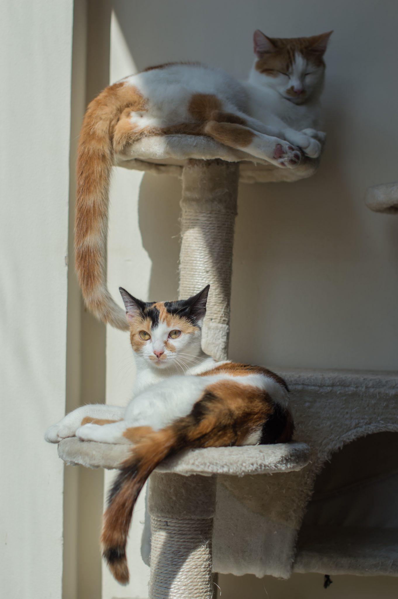 고양이가 높은