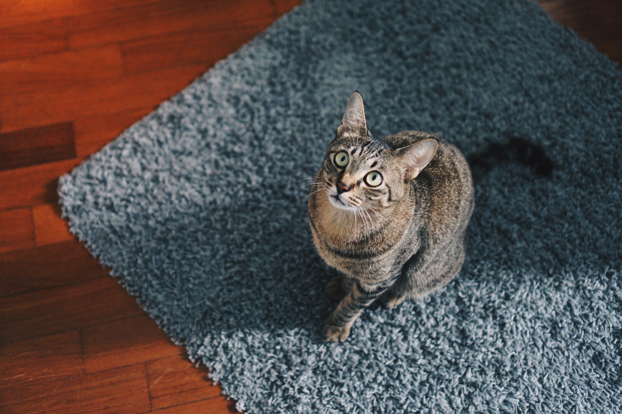 고양이 의사표현