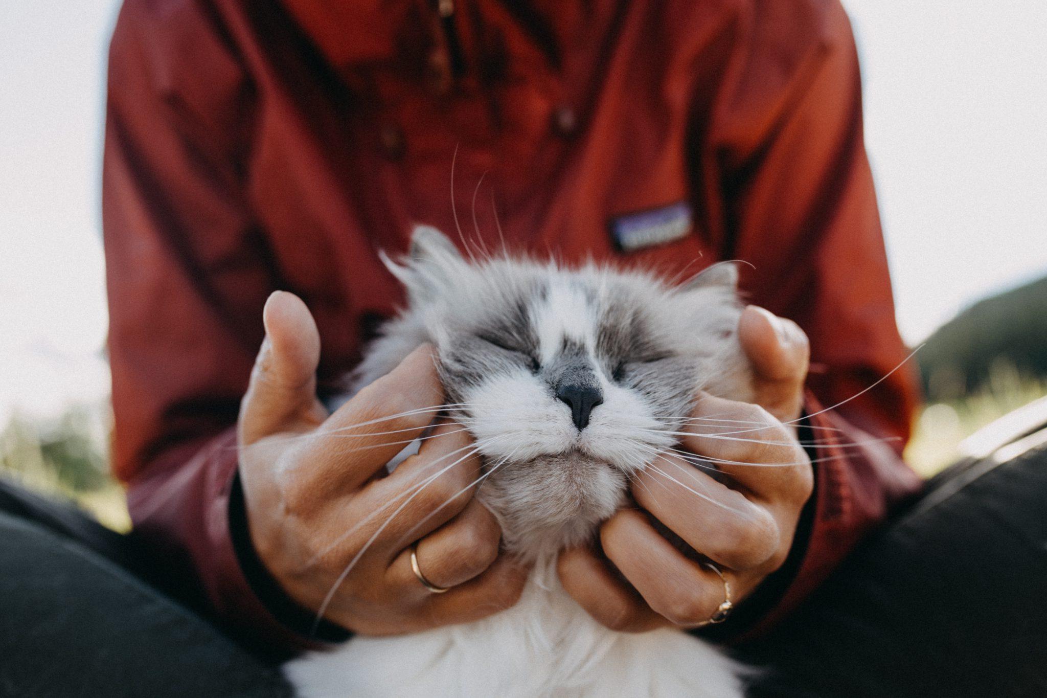 고양이에게 애정표현
