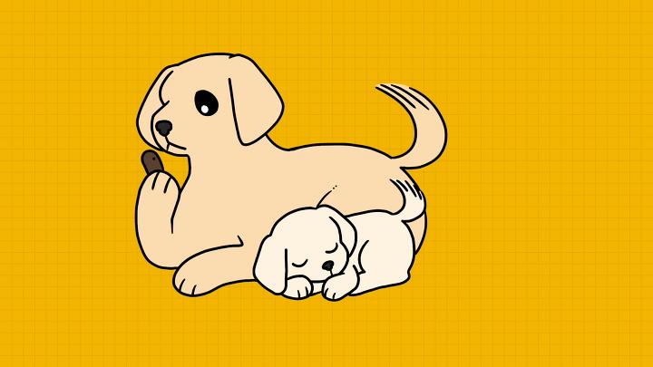 강아지 식분증