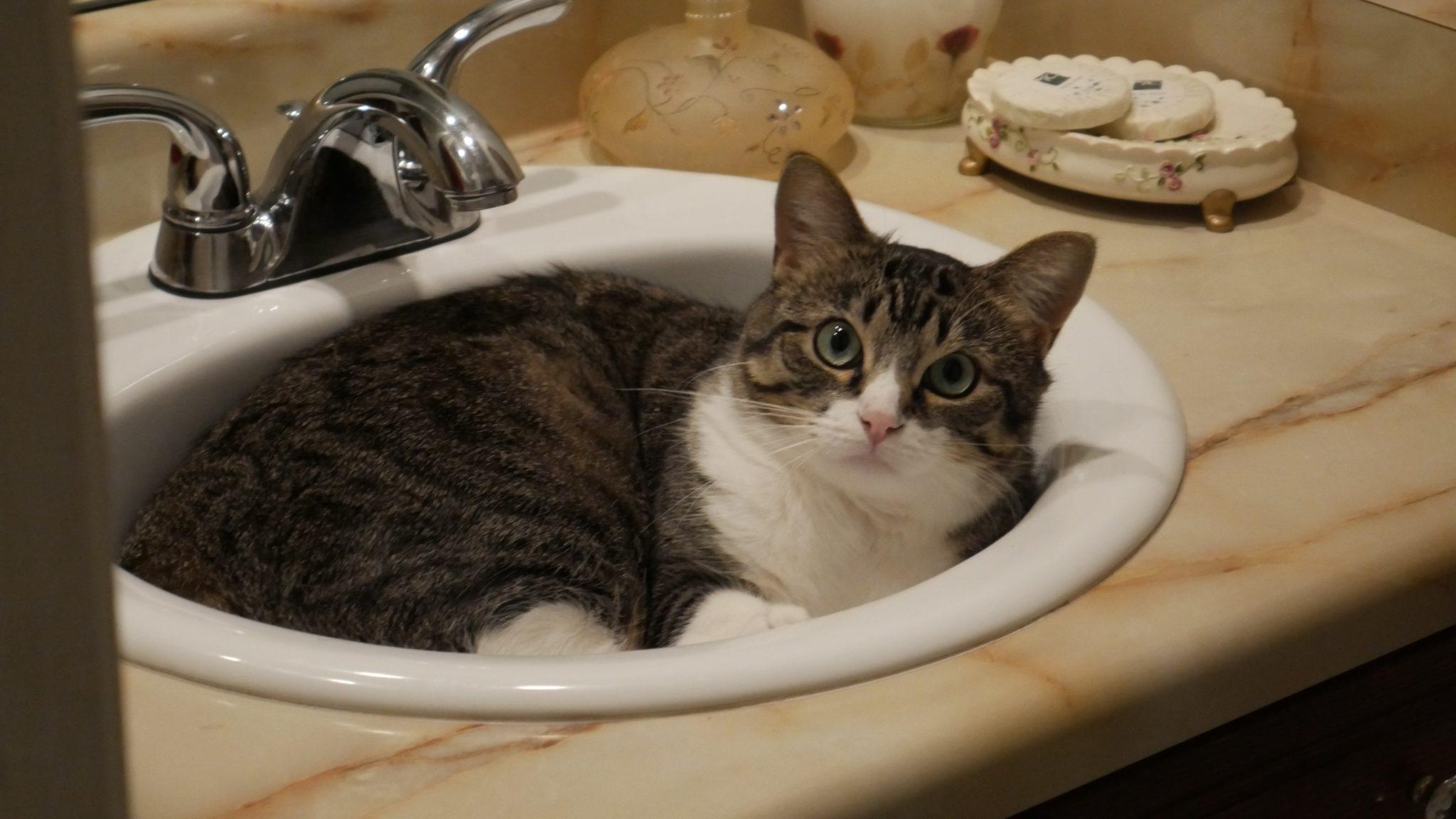 고양이 변기통