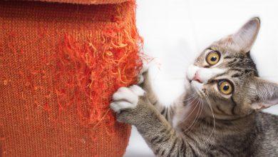 고양이가 소파