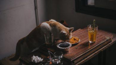 고양이가 사람 음식