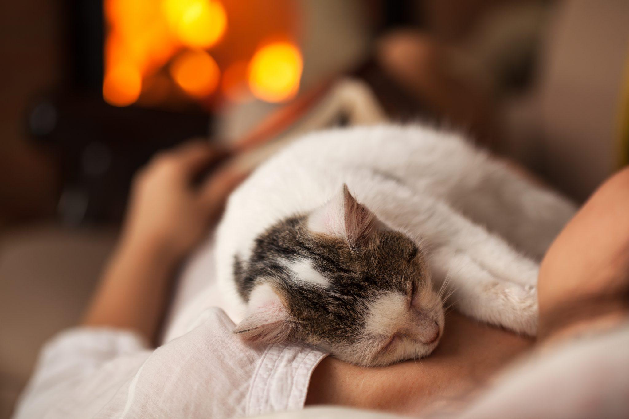 고양이가 편안함을