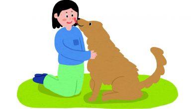 Photo of 강아지 행동 및 본능 고려해서 훈련 시키기