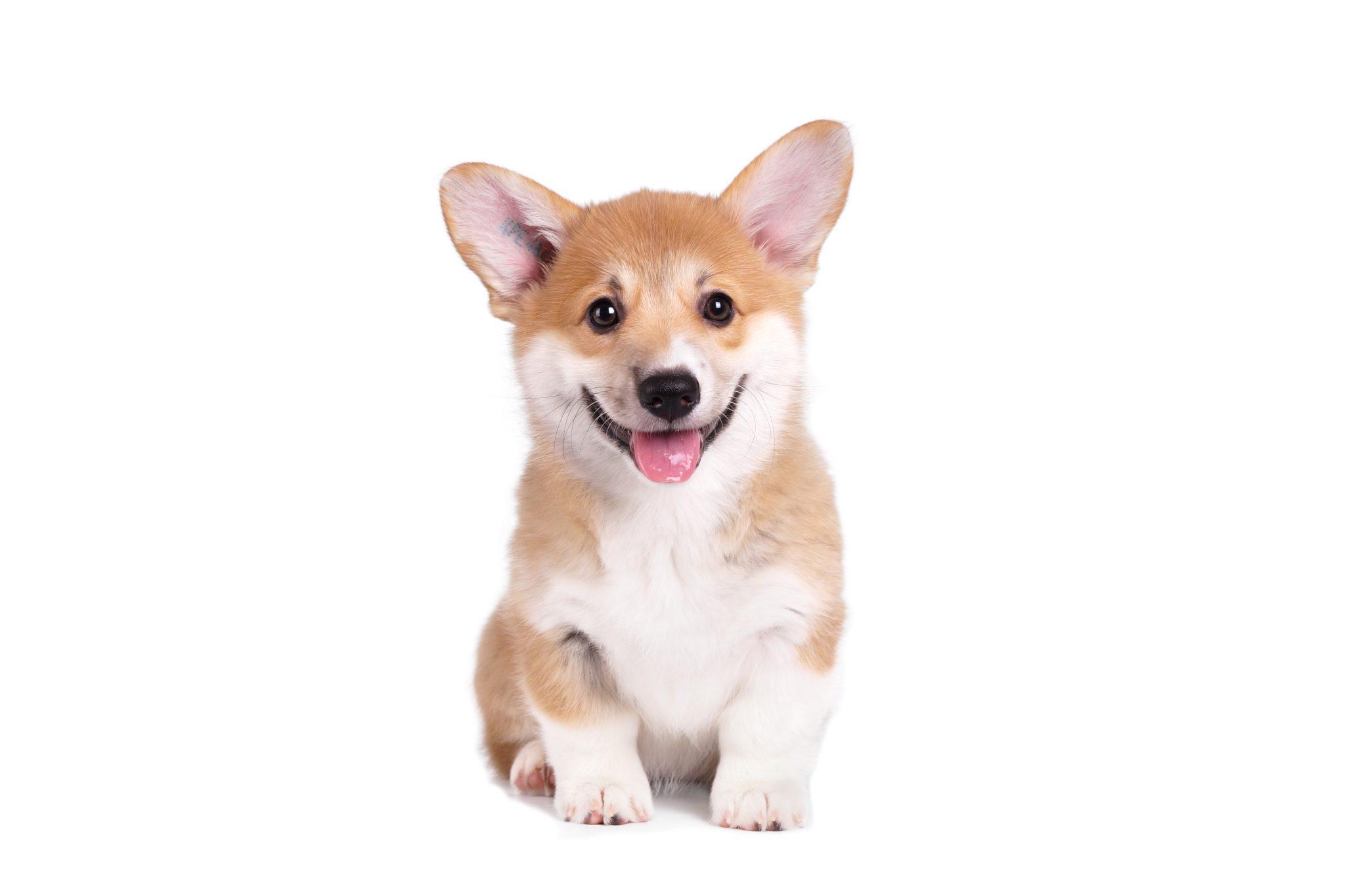 강아지 서열정리