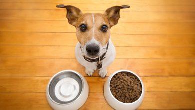 강아지 비타민