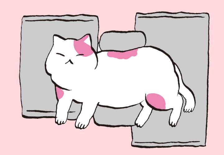고양이 죽음