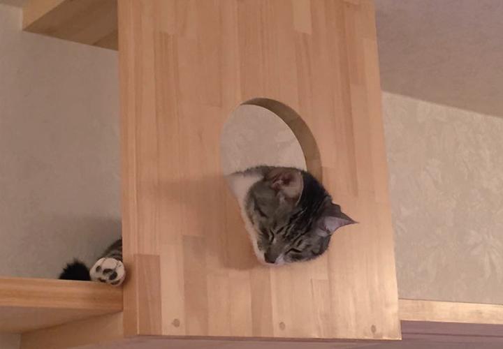 고양이 숨숨집