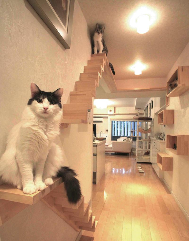 고양이 캣워크