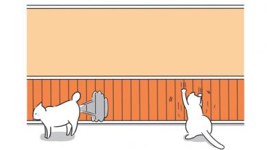 고양이 마킹